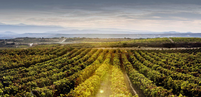 """Pernod Ricard lansiral načrt trajnostnega razvoja in odgovornosti """"Good Times from a Good Place"""""""